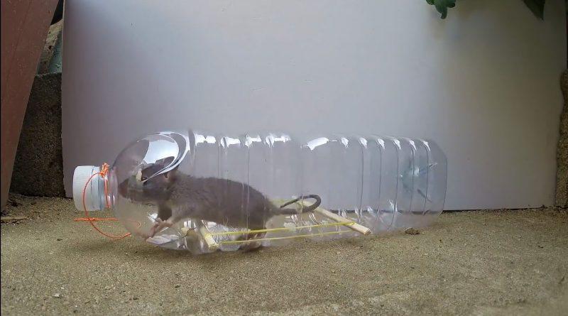 Piège a souris et a rat